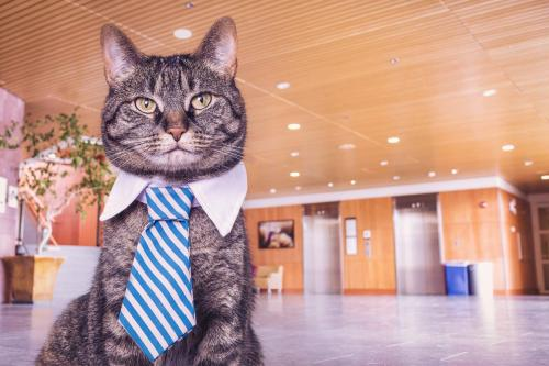 Business Cat Free Photo